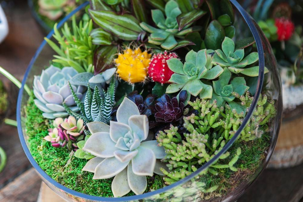 How To Make Your Own Terrarium Manic Botanic