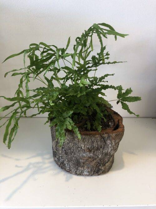 Growing_Gift_in_ Wood_Planter.3