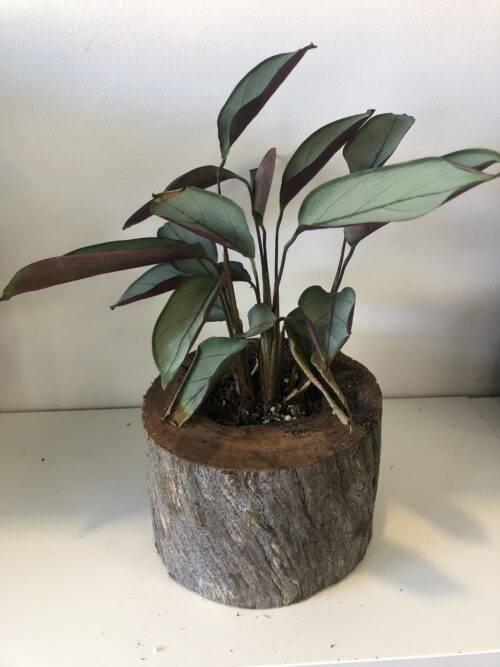 Growing_gift_wood_planter4