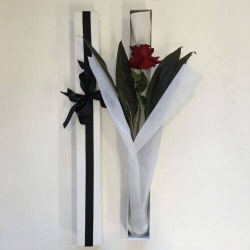 Single Long -Stemmed red Rose in a Box