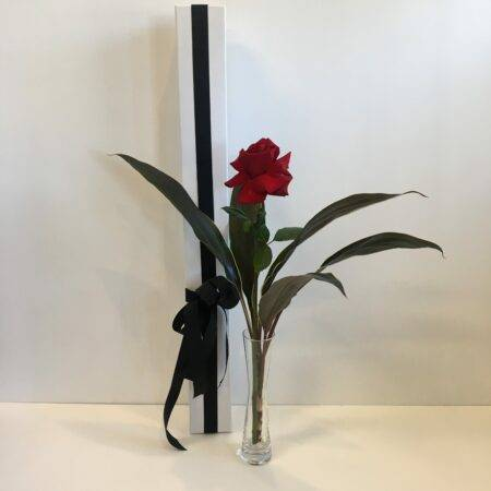 Single Long Stemmed red rose - bud vase
